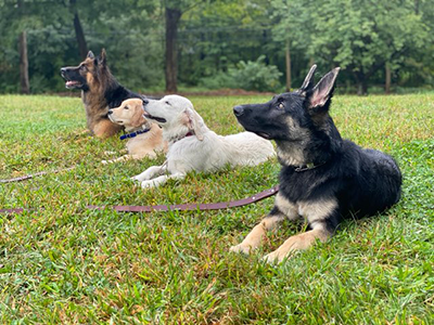 dog training New York